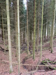 Wald Siebengebirge